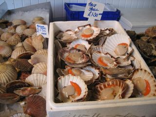 Diver scallops in the shell, off the morning boat.