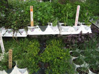 Herb Lyceum herbs