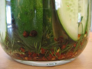 Post image for Dill Pickles